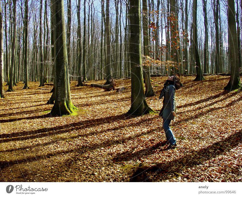 herbstzeitlose Wald Herbst Blatt werfen braun Baum Ausgelassenheit Spielen Freude fallen blätterregen Blauer Himmel Schatten Spaziergang