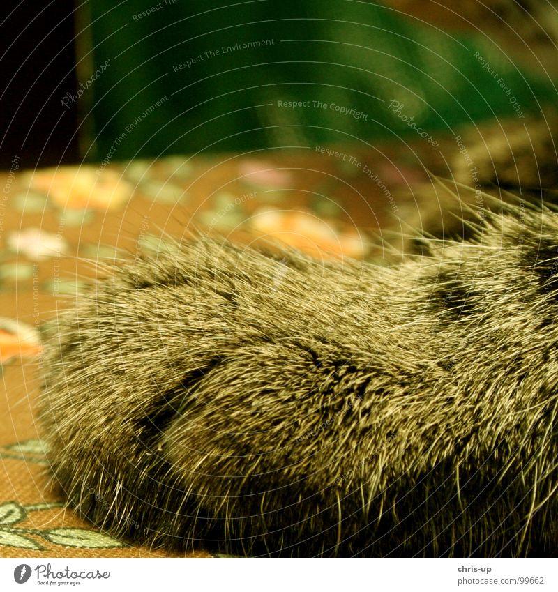 Pfote des Tigers Katze Hund Katzenpfote Fell Krallen Siebziger Jahre gelb Muster Tier gefährlich Landraubtier Raubkatze niedlich süß verschlafen Schnurren