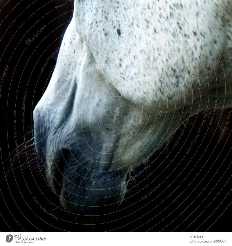 Doppelkinn? Haare & Frisuren Pferd Falte Lippen Bart Fleck Säugetier Maul scheckig Schimmelpilze Barthaare Tier