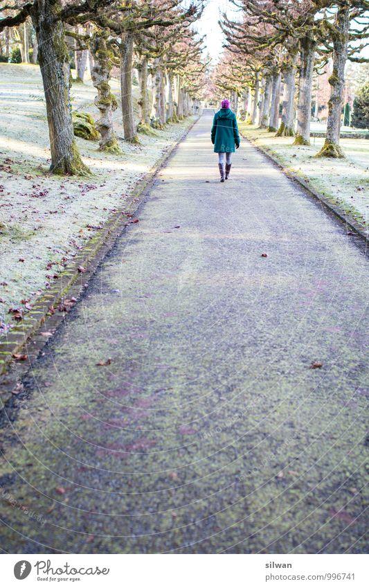 durch die Allee Mensch Jugendliche alt schön Baum Junge Frau ruhig Winter kalt Erwachsene Wiese feminin Wege & Pfade Freiheit außergewöhnlich Park