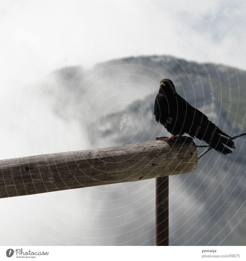 Der frühe Vogel fängt den Wurm Himmel blau Sommer schwarz Ferne Berge u. Gebirge Freiheit Holz Nebel fliegen Felsen sitzen Platz Aussicht beobachten