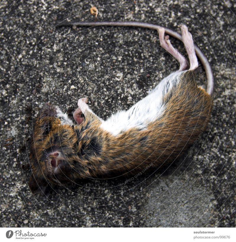 Katzenfutter - Die Totale Tier Auge Tod Leben Haare & Frisuren klein Beine liegen Nase nass Ernährung niedlich Vergänglichkeit Ohr Fell Maus