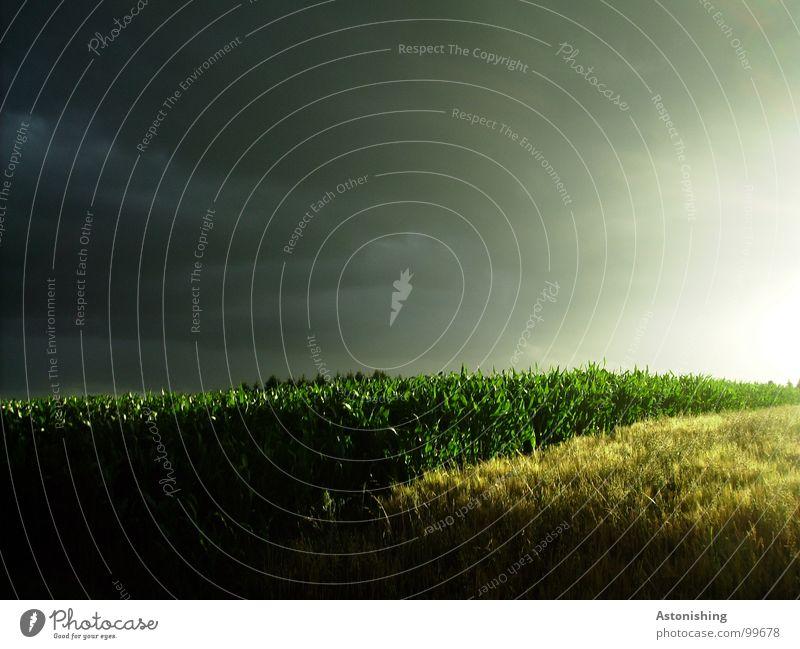 sun vs. darkness Natur Himmel Sonne grün Pflanze Sommer schwarz Wolken gelb dunkel Wiese Regen Landschaft Stimmung hell Feld