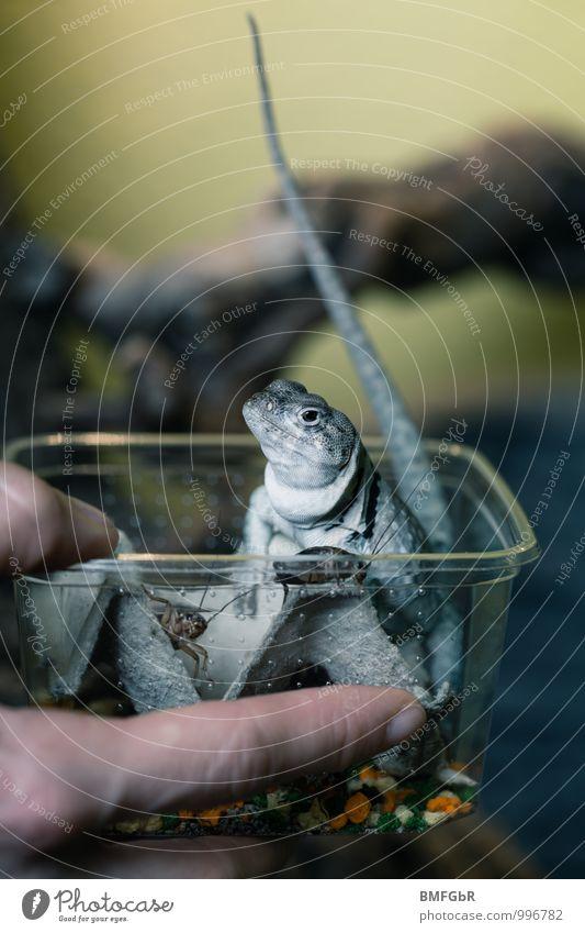 Selbstbedienungsladen Tier lustig klein Freizeit & Hobby Zufriedenheit beobachten Finger Neugier Insekt Handy Jagd frech selbstbewußt krabbeln
