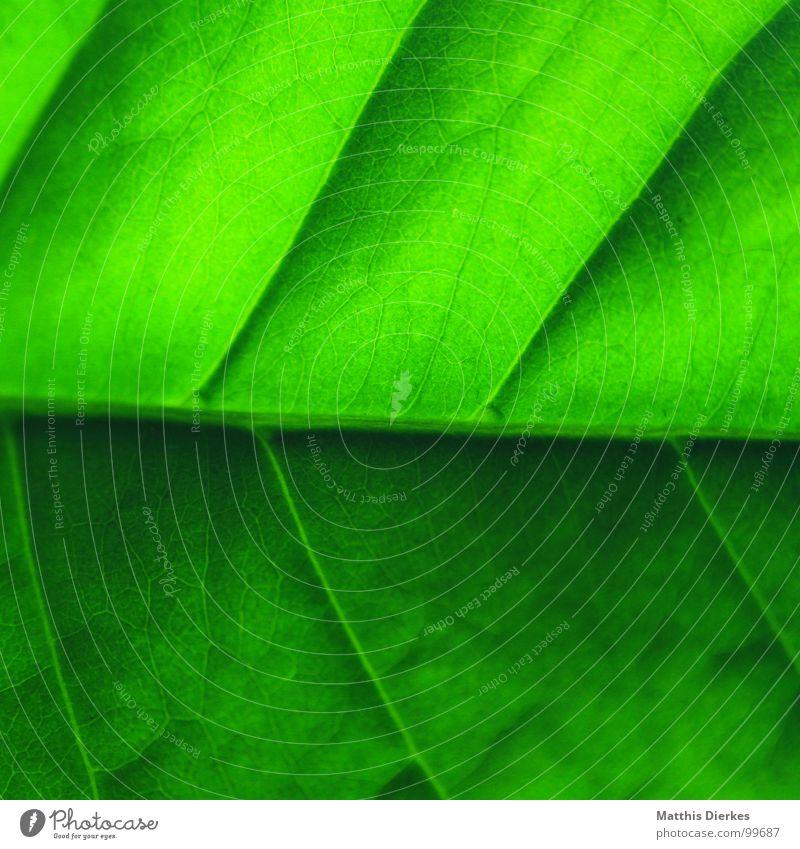 STRUKTUR Blatt grün Baum Ordnung Hierarchie Grenze Heimat Wohnung Wohlgefühl knallig Beleuchtung Grünstich diagonal Schachtel normal Sommer Kommunizieren Garten