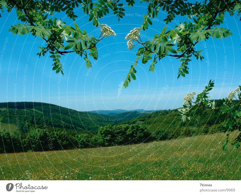 Zweig im Weg Baum Blatt Wald Wiese Berge u. Gebirge Landschaft