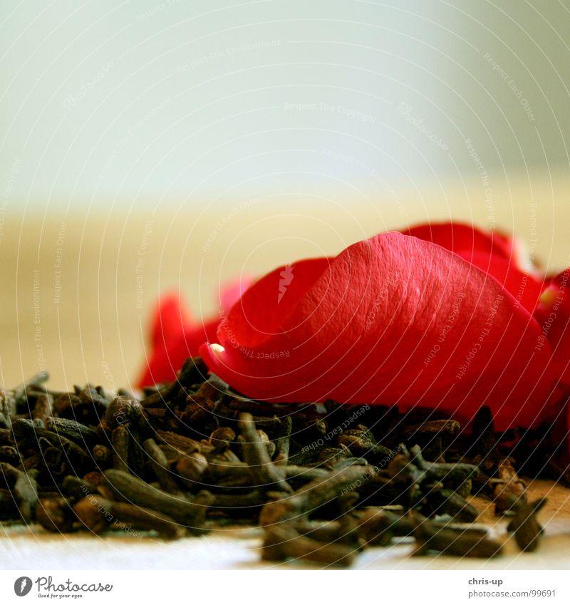 Nelken und Rosen sind gut zum posen rot Pflanze Blume Ernährung Garten Blüte braun Romantik Gastronomie Blühend Kräuter & Gewürze Duft getrocknet welk