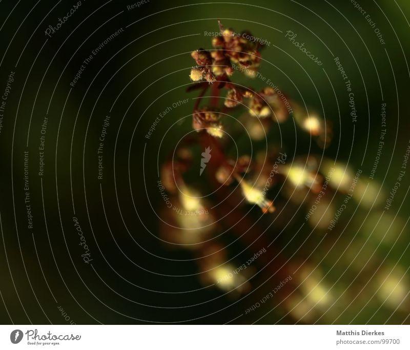 ON THE RUN Pflanze Sträucher Baum Glocke Unschärfe schwarz Wachstum schön zart Ranke Sommer Garten zärtlichk