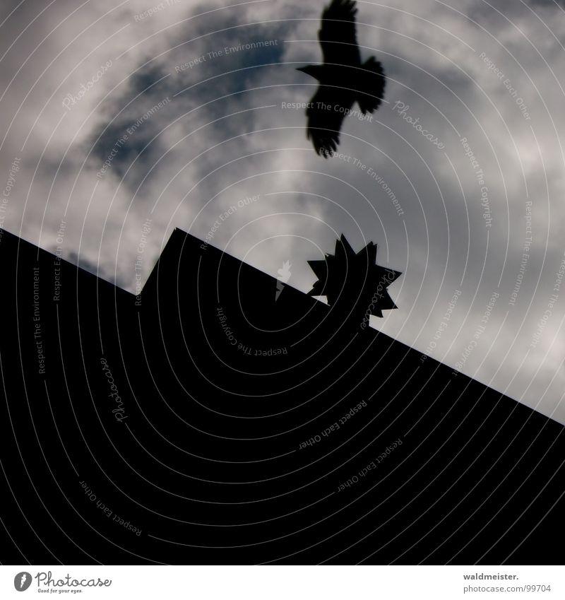 Geisterhaus Himmel alt Haus dunkel verfallen Geister u. Gespenster mystisch unheimlich spukhaft bezaubernd Krähe Rabenvögel