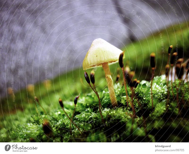 Scotty Beamen Natur grün Pflanze gelb Leben Herbst Wand Mauer klein Umwelt Wachstum Blühend Weltall Sonnenschirm Pilz Botanik