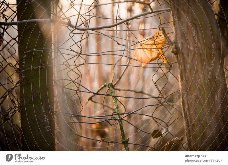 Gefangen im Herbst Natur Pflanze Einsamkeit Landschaft ruhig Winter Wald Traurigkeit Holz braun Metall trist Beton Hoffnung fallen