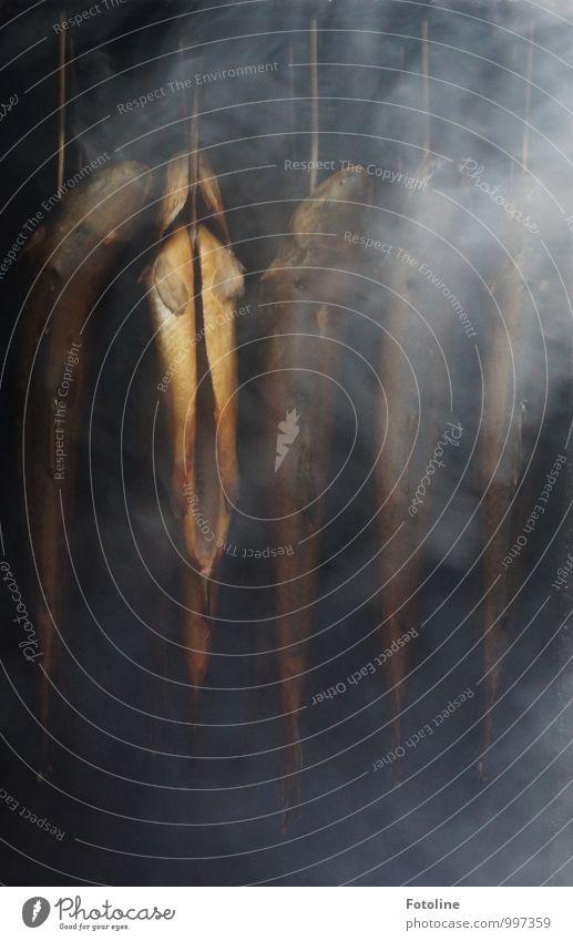Festtagsschmaus Fisch dunkel Räucherfisch Räucherforelle geräuchert Forelle Rauch rauchend Duft Rauchen Farbfoto Gedeckte Farben Außenaufnahme Nahaufnahme