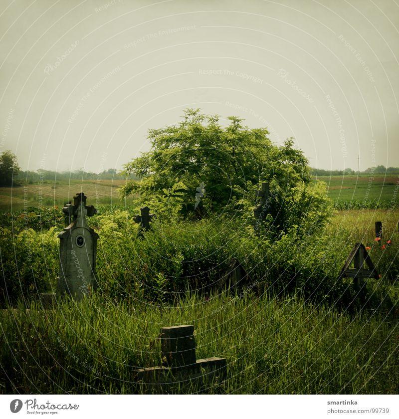 Gras drüber wachsen lassen Grab Grabmal Grabstein Begräbnisstätte Abschied vergessen Einsamkeit Trauer Verzweiflung Moral Alter Friedhof Rücken Letzte Ruhe Tod
