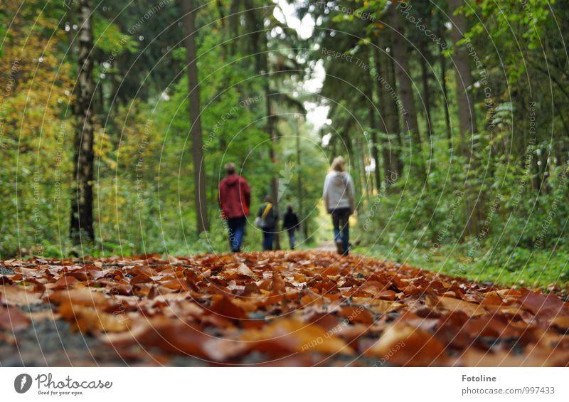 Herbstspaziergang Mensch Familie & Verwandtschaft Leben 4 Umwelt Natur Landschaft Pflanze Erde Baum Blatt Wald natürlich Spaziergang herbstlich Herbstlaub