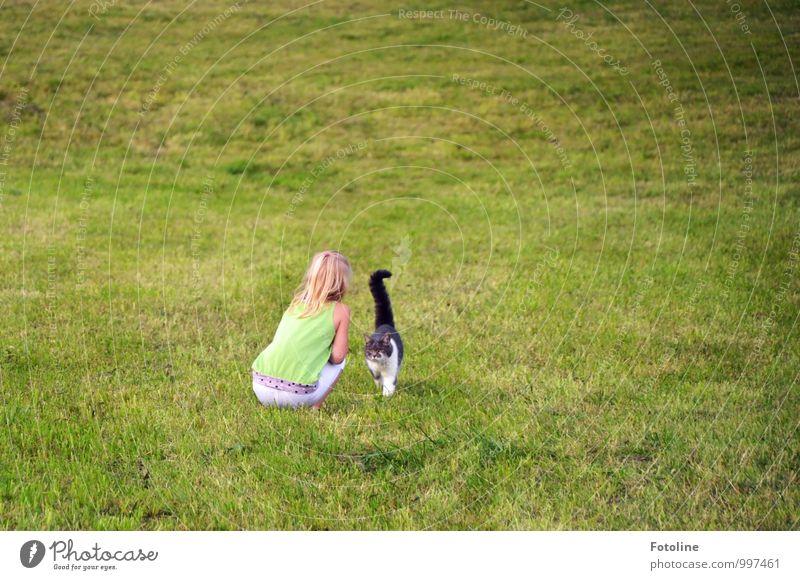 Komm schmusen! Katze Mensch Kind Natur Pflanze grün weiß Sommer Landschaft Mädchen Tier schwarz Umwelt Wiese feminin Gras