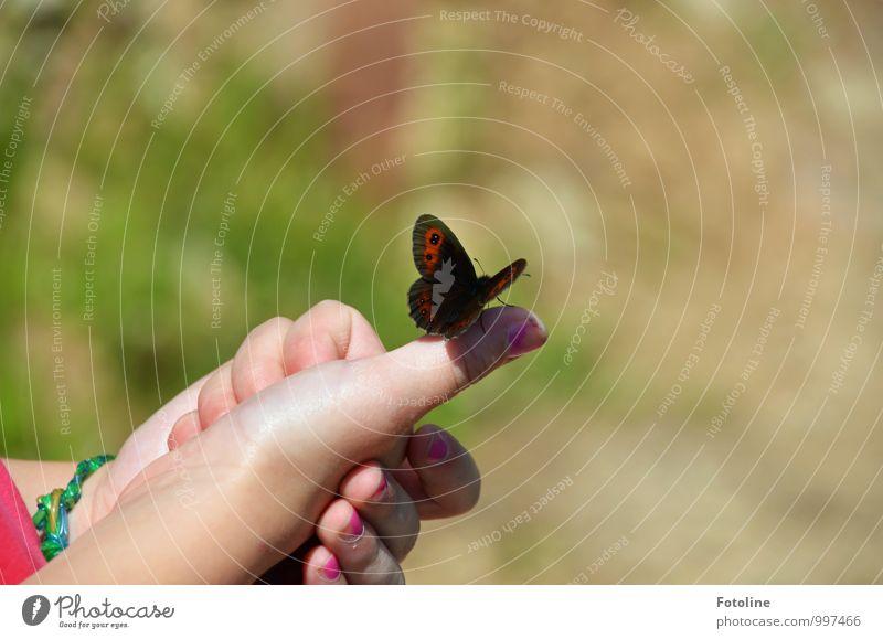 Hallo kleiner Freund! Mensch feminin Kind Mädchen Kindheit Finger Umwelt Natur Tier Sommer Schönes Wetter frei Freundlichkeit Zusammensein hell natürlich Wärme
