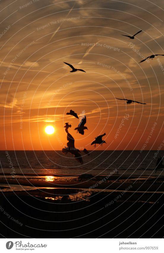 Am Meer Ferien & Urlaub & Reisen Sommer Sommerurlaub Sonne Strand Sand Wasser Sonnenaufgang Sonnenuntergang Sonnenlicht Schönes Wetter Küste Nordsee Wildtier
