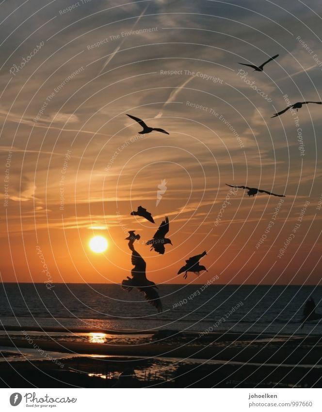 Ab in den Urlaub Himmel Ferien & Urlaub & Reisen blau Wasser Sommer Sonne Meer ruhig Wolken Strand Ferne Küste Freiheit fliegen Sand Vogel