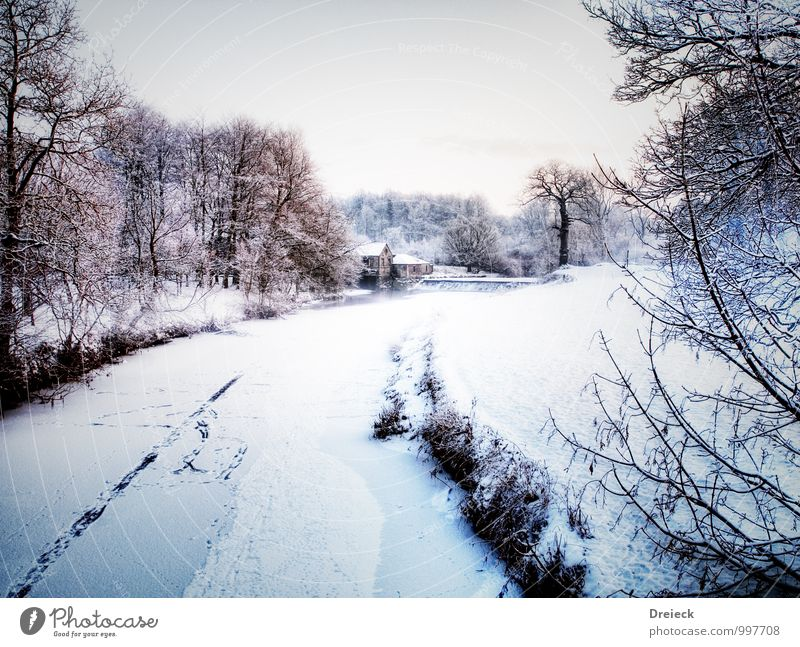 F(l)usspuren Umwelt Natur Landschaft Winter Schnee Schneefall Baum Flussufer frieren kalt weiß Farbfoto Menschenleer Tag