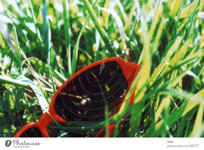 brillengras Gras grün Brille Sonnenbrille Sommer abgeworfen saftig Froschperspektive Frühling liegen Elbe Elbwiese grün-rot-kontrast Natur naturstruktur