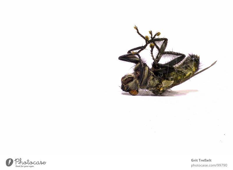 So ist das Leben nerven nervig Tod Fliege fliegen Makroaufnahme