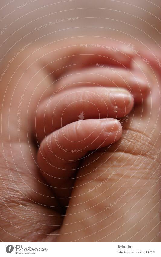 Handgemenge Finger Fingernagel Kind Baby Sohn Daumen Nahaufnahme Nachkommen Vertrauen Zuneigung Pore Kleinkind Gesellschaft (Soziologie) Zusammensein klein groß