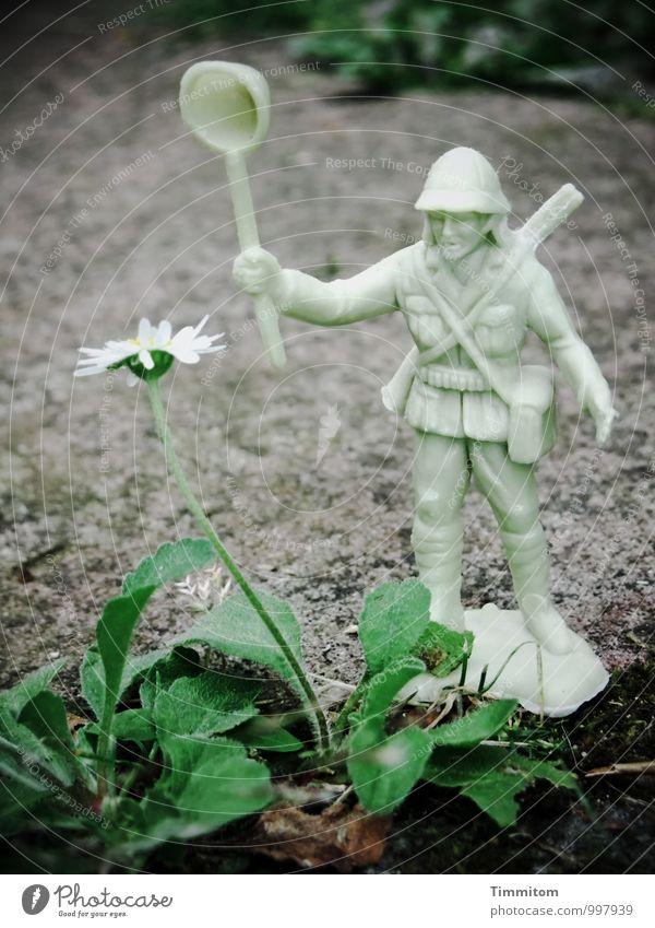 Außergewöhnlich | Der Kampf mit dem Gänseblümchen. Umwelt Natur Pflanze Blatt Blüte Garten Spielzeug Stein Kunststoff beobachten kämpfen bedrohlich dunkel grau