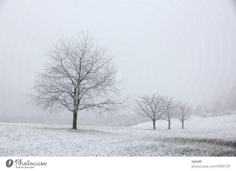 grau in grau Landschaft Winter schlechtes Wetter Schnee Schneefall Baum Wiese dunkel kalt trist schwarz weiß Traurigkeit Einsamkeit Natur ruhig stagnierend