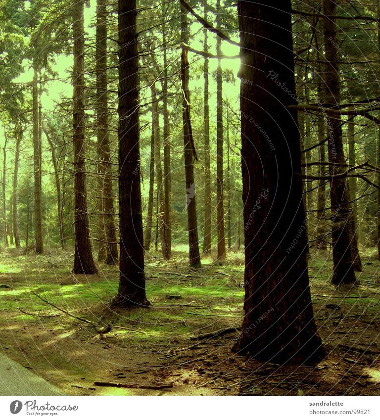 Am Waldrand Baum grün Geäst Fußweg schön Niederlande Sommer Farbe Ast Einsamkeit