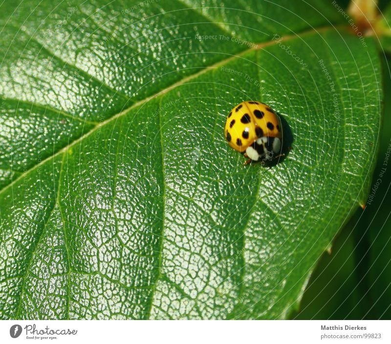 SCHLECHTE TARNUNG schön Sommer Blatt Tier ruhig Bewegung klein Beleuchtung braun warten sitzen liegen stehen Pause Punkt Insekt