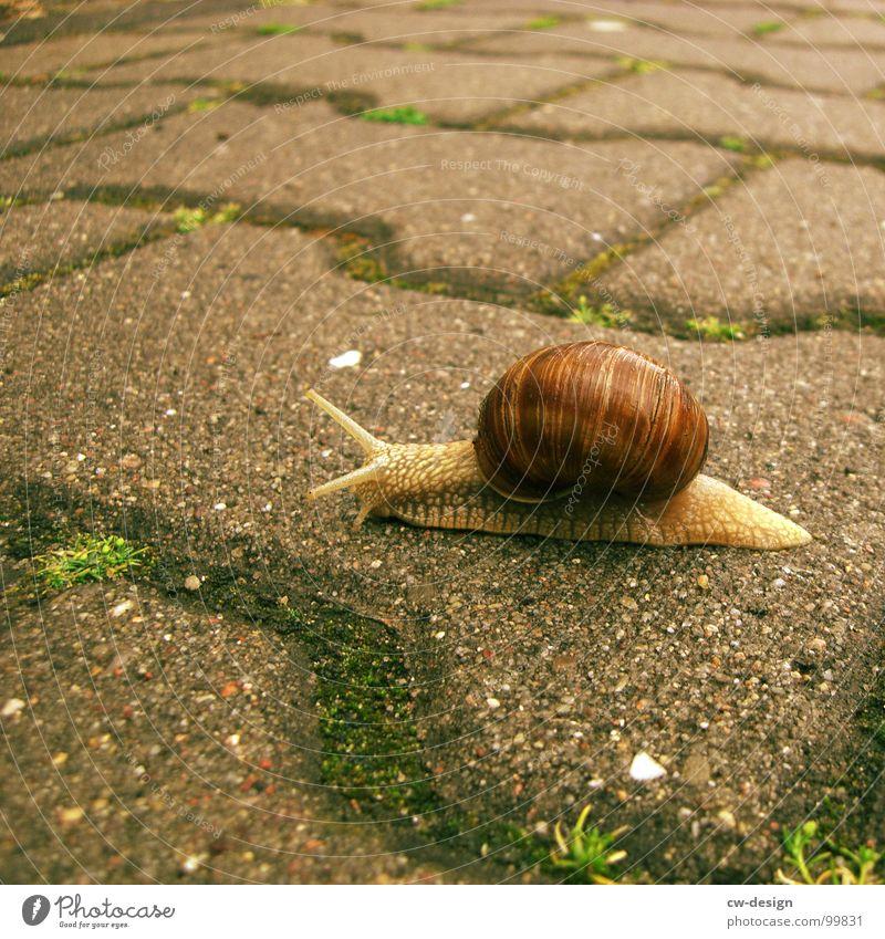 Postkarte für sto.E Natur grün Tier ruhig Haus Straße Leben Gefühle Gras Stein 2 Haut Verkehr Beton Geschwindigkeit Kontakt