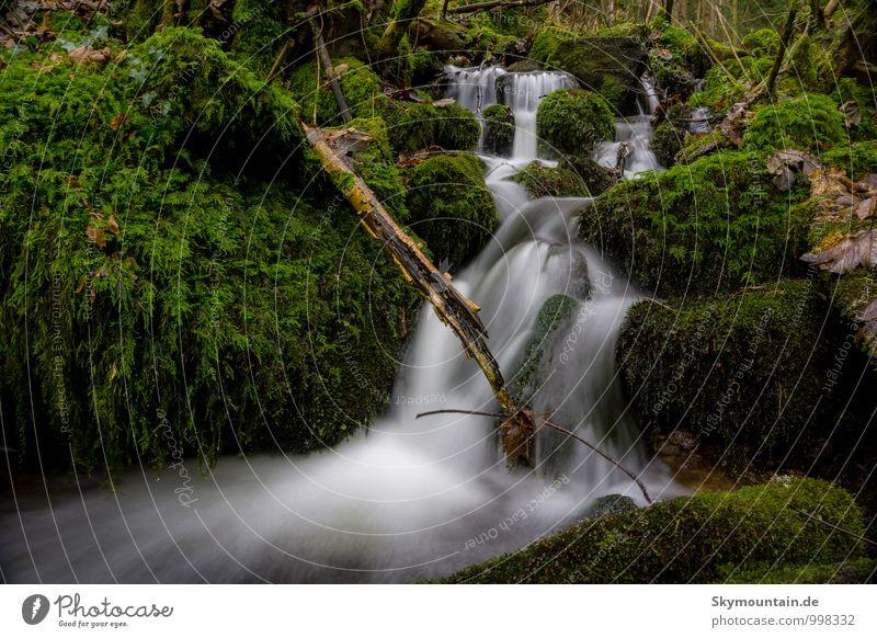 Laufenbach schön Wasser Erholung ruhig Freude Wald Glück elegant Kraft Zufriedenheit authentisch wandern Fröhlichkeit genießen fantastisch Lebensfreude