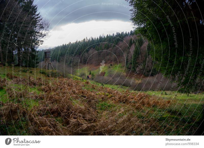 Hunting spot Ferien & Urlaub & Reisen Baum Erholung Blume Blatt Freude Ferne Winter Berge u. Gebirge Herbst Gras Blüte Glück Freiheit Lifestyle träumen