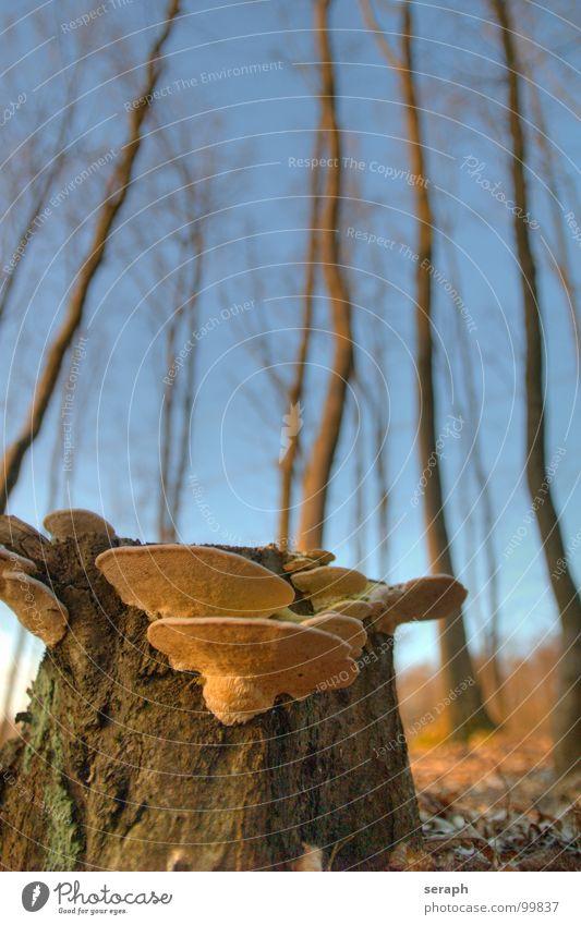 Baumpilze Wald Baumstumpf Baumrinde Baumstamm Eiche Umwelt Pilz Pilzsucher verrotten Schimmelpilze Schwamm Symbiose Moos Lebensformen Natur pflanzlich