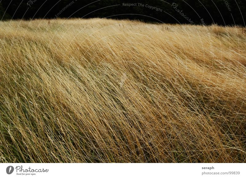 Fel(l/d) Natur Pflanze Landschaft Wiese Gras Blüte natürlich Hintergrundbild wild Wind Stengel Halm Samen Grasland Riedgras Grasnarbe
