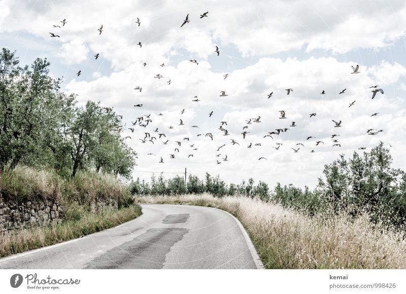 Auf der Suche Umwelt Natur Landschaft Pflanze Tier Himmel Wolken Sonnenlicht Sommer Schönes Wetter Wärme Baum Sträucher Nutzpflanze Olivenbaum Olivenhain Feld