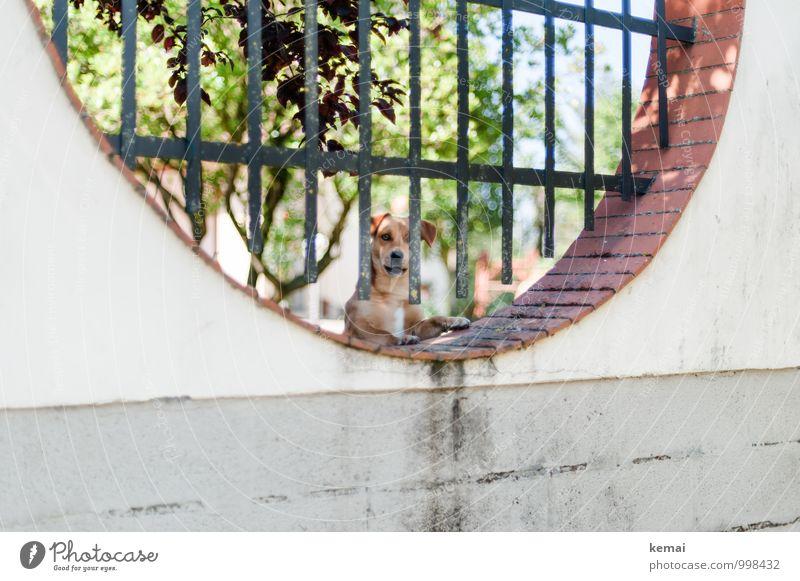 Wir kaufen nix Baum Mauer Wand Zaun Haustier Hund Tiergesicht Haushund 1 Blick hell Wachsamkeit Schutz vertikal rund Farbfoto Gedeckte Farben Außenaufnahme Tag