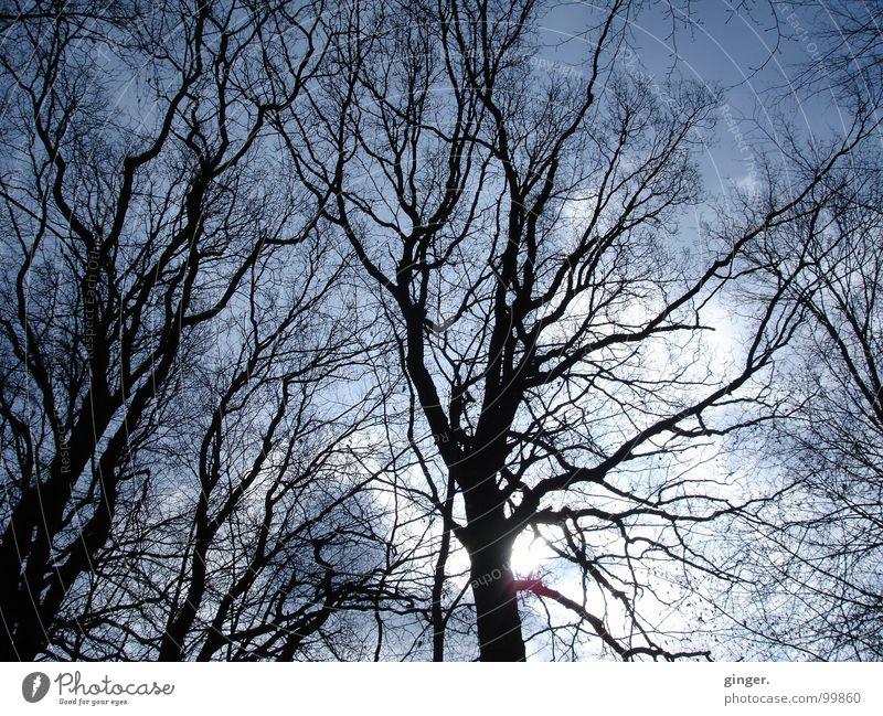 Astgeflecht im Morgengrauen Natur Himmel Baum oben netzartig Lichtspiel Zweige u. Äste laublos Silhouette Geäst Sonne Wolken Winter Laubbaum verästelt verzweigt