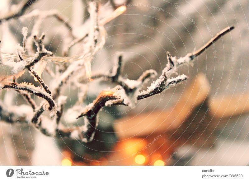 wintermärchen Winter Schnee Ast träumen Schneefall Kunstschnee Dekoration & Verzierung bezaubernd Stern (Symbol) Weihnachten & Advent Winterlicht Lichterkette