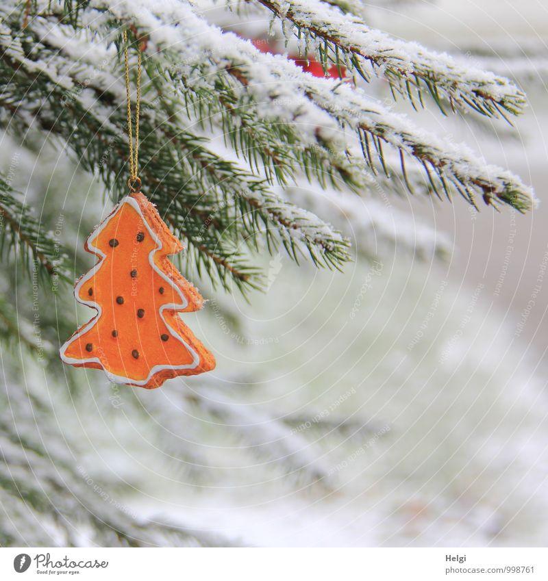 Weihnachtsbaum im Schnee... Natur Weihnachten & Advent Pflanze schön grün weiß Baum ruhig Winter kalt Umwelt Wiese natürlich außergewöhnlich Stimmung