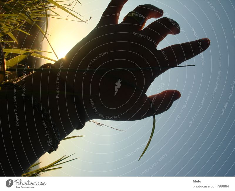 reach out Hand Sonnenuntergang Gras Halm Finger grün Vertrauen Schatten Himmel blau