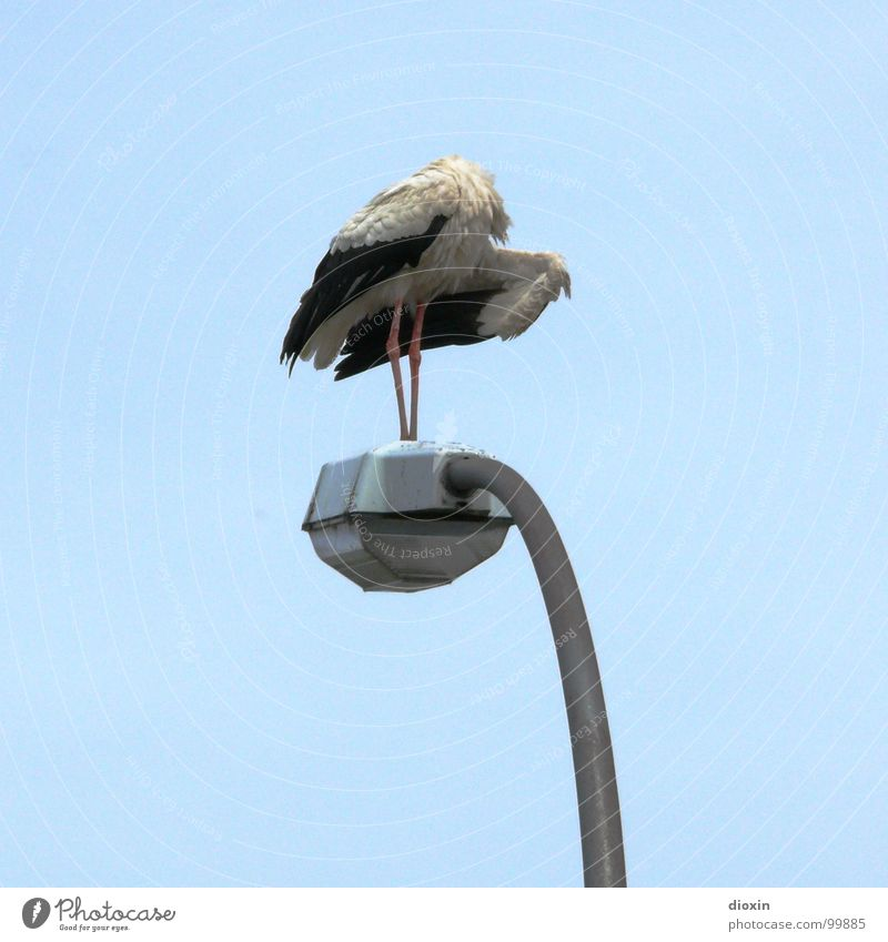 Not Ready For Take Off Himmel Natur blau Tier Umwelt Lampe Wetter Vogel warten Wildtier fliegen Pause Flügel Feder Reinigen Sauberkeit