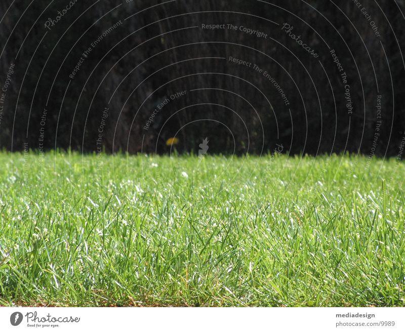 gras grün Wiese Gras Garten Rasen