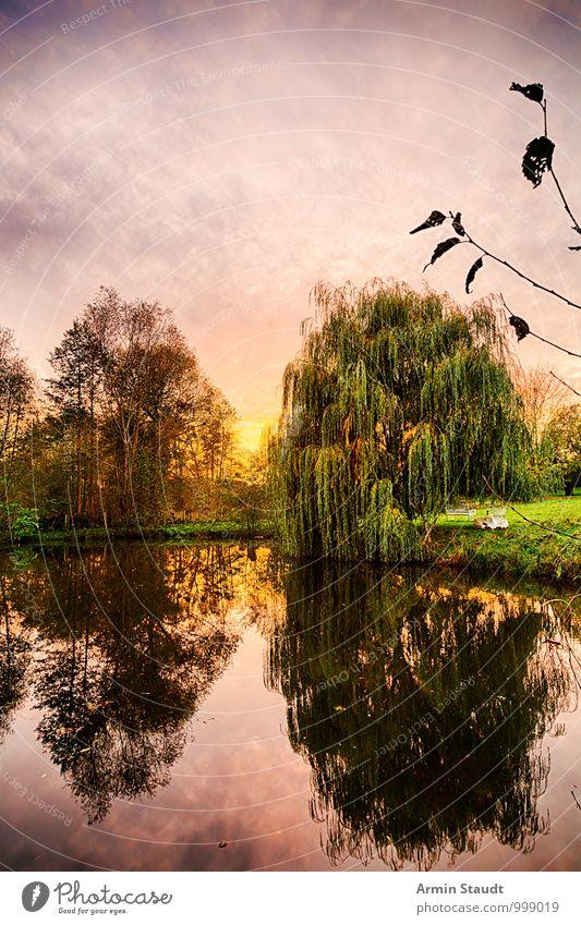 Trauerweide am Teich Ferien & Urlaub & Reisen Natur Landschaft Luft Wasser Himmel Sonne Sonnenaufgang Sonnenuntergang Herbst Baum Park See Erholung träumen
