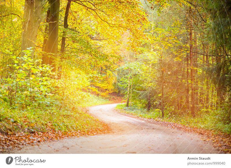 Verträumter Waldweg harmonisch Erholung Ferien & Urlaub & Reisen Umwelt Natur Landschaft Erde Sonnenlicht Herbst Schönes Wetter Baum Wege & Pfade Fußweg atmen