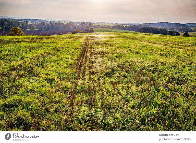 Spinnweben auf Herbstwiese Himmel Natur Ferien & Urlaub & Reisen schön grün Sonne Landschaft Ferne Umwelt Gefühle Wiese Gras natürlich außergewöhnlich glänzend