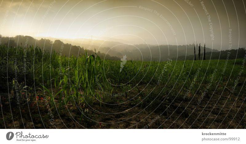 Morgenlicht II Natur Baum Pflanze Wald Nebel Erde Bodenbelag Italien Toskana Pappeln