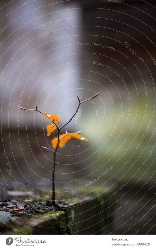 bäumchencontest. Umwelt Natur Pflanze Baum Moos Blatt Fabrik Ruine Stein Holz Wachstum dunkel frisch Beginn anstrengen entdecken Entschlossenheit Hoffnung Leben