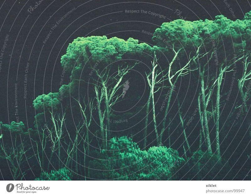 magische Bäume Baum grün bezaubernd schwarz Langzeitbelichtung Himmelskörper & Weltall Nacht Sommer Kontrast Stern Transzendenz Bild Kunst Surrealismus mystisch