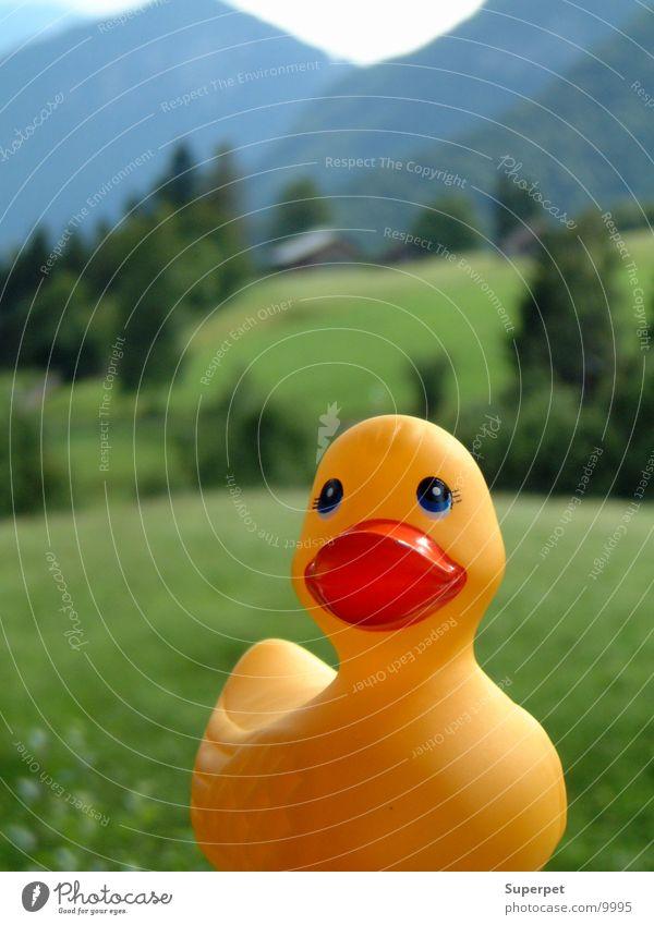 Ente im Wald Freizeit & Hobby